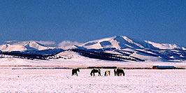 /images/133/2006-02-hartsel-snow-horses-pano.jpg - #02776: horses grazing on a cool winter day ... between Hartsel & Wilkerson Pass … Feb 2006 -- Wilkerson Pass, Colorado