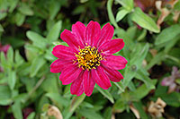 /images/133/2006-10-08-cent-flowers03.jpg - #02999: pink flower in Centennial … Oct 2006 -- Centennial, Colorado