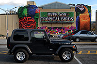 /images/133/2006-10-15-niag-birds02.jpg - #03055: Over 400 Tropical Birds … black Jeep Wrangler Rubicon ... images of Niagara Falls … Oct 2006 -- Niagara Falls, Ontario.Canada