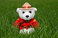 /images/133/2006-10-21-oak-bear01.jpg - #03112: White Canadian RCMP (Royal Canadian Mounted Police) bear in the grass … Oct 2006 -- Oakville, Ontario.Canada