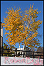 /images/133/2006-10-28-lone-tree-yellow.jpg - #03165: images of Lone Tree … Oct 2006 -- Lone Tree, Colorado