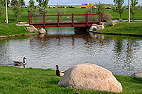 /images/133/2007-05-16-linc-pond02.jpg - #03829: duck and goose at Meridian Pond in Englewood … May 2007 -- Englewood, Colorado
