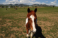 /images/133/2007-05-20-lake-horses02.jpg - #03846: Painted Horse in Lakewood, Colorado … Red Rocks in the background … May 2007 -- Lakewood, Colorado