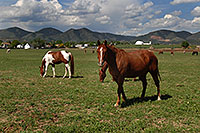 /images/133/2007-05-20-lake-horses06.jpg - #03850: Horses in Lakewood, Colorado … Red Rocks in the background … May 2007 -- Lakewood, Colorado