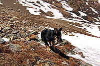 /images/133/2007-06-10-elbert-dog04.jpg - #03929: images of Mt Elbert, Colorado