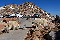 /images/133/2007-06-17-evans-goats-pho1.jpg - #03942: images of Mt Evans … June 2007 -- Mount Evans Road, Mt Evans, Colorado