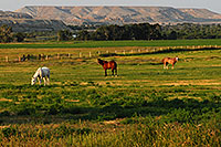 /images/133/2007-07-20-wyo-riv-horses01.jpg - #04296: Horses grazing west of Riverton … July 2007 -- Riverton, Wyoming