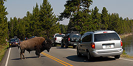 /images/133/2007-07-22-y-buff-water01-pa.jpg - #04345: Buffalo crossing the road and river to join the other buffalo … July 2007 -- LeHardys Rapids, Yellowstone, Wyoming