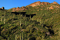 /images/133/2008-03-02-supers-2227.jpg - #04892: Saguaro Cactus in Superstition Mountains … March 2008 -- Superstitions, Arizona