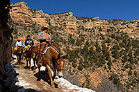 /images/133/2008-03-30-gc-ba-mul-6176.jpg - #04965: Mule Guide and tourists riding mules along Bright Angel Trail in Grand Canyon … March 2008 -- Bright Angel Trail, Grand Canyon, Arizona