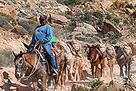 /images/133/2008-04-06-hav-m-terri-1516.jpg - #05178: Mules along Havasupai Trail … April 2008 -- Havasupai Trail, Havasu Falls, Arizona