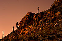 /images/133/2008-09-13-squaw-cactus-26328.jpg - #05917: Cactus and stars in the moonlight at Squaw Peak … September 2008 -- Squaw Peak, Phoenix, Arizona