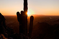 /images/133/2008-09-23-squaw-cactus-29681.jpg - #05959: View of Phoenix -- Cactus Sunset at Squaw Peak … September 2008 -- Squaw Peak, Phoenix, Arizona