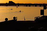 /images/133/2008-10-23-tempe-sunset-37513.jpg - #05951: Great Blue Heron watching 2 single scullers at Tempe Town Lake … October 2008 -- Tempe Town Lake, Tempe, Arizona