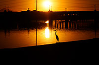 /images/133/2008-11-14-tempe-heron-46908.jpg - #06039: Great Blue Heron at sunset at Tempe Town Lake … November 2008 -- Tempe Town Lake, Tempe, Arizona