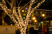 /images/133/2008-12-05-tempe-mill-road-60314.jpg - #06411: Christmas lights by Mission Palms along Mill Road in Tempe … December 2008 -- Mill Road, Tempe, Arizona