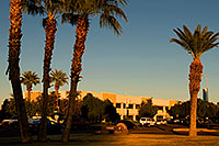 /images/133/2008-12-09-tempe-kiwanis-palms-61017.jpg - #06446: White Xterra and traffic at Kiwanis Park … December 2008 -- Kiwanis Park, Tempe, Arizona