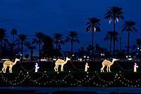 /images/133/2008-12-14-mesa-temple-caravan-64040.jpg - #06457: Camel Caravan - Mesa Temple Garden Christmas Lights Display … December 2008 -- Mesa Arizona Temple, Mesa, Arizona