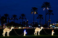 /images/133/2008-12-14-mesa-temple-caravan-64063.jpg - #06510: Camel Caravan - Mesa Temple Garden Christmas Lights Display … December 2008 -- Mesa Arizona Temple, Mesa, Arizona
