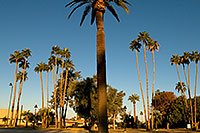 /images/133/2008-12-21-mesa-pioneer-65520.jpg - #06557: Morning at Main St in Mesa … December 2008 -- Pioneer Park, Mesa, Arizona