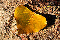 /images/133/2009-01-12-gilbert-leaves-74874.jpg - #06900: Leaves at Discovery Park in Gilbert … January 2009 -- Discovery Park, Gilbert, Arizona