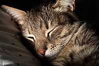 /images/133/2009-03-30-tempe-ella-102157.jpg - #07370: Ella sleeping - Ella, the loveable stray cat … April 2009 -- Tempe, Arizona