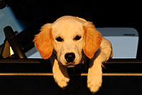 /images/133/2009-09-24-gilbert-morn-bella-112915.jpg - #07495: Bella (4 months old) in the car … September 2009 -- Gilbert, Arizona
