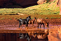 /images/133/2010-09-03-monvalley-horses-29790.jpg - #08557: Images of Monument Valley … September 2010 -- Monument Valley, Utah