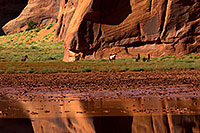 /images/133/2010-09-03-monvalley-horses-29842.jpg - #08558: Images of Monument Valley … September 2010 -- Monument Valley, Utah
