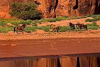 /images/133/2010-09-03-monvalley-horses-29858.jpg - #08559: Images of Monument Valley … September 2010 -- Monument Valley, Utah
