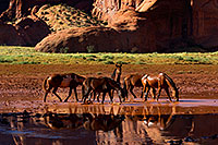 /images/133/2010-09-03-monvalley-horses-29939.jpg - #08561: Images of Monument Valley … September 2010 -- Monument Valley, Utah