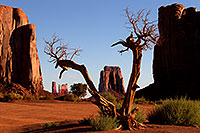 /images/133/2010-09-04-monvalley-tree-30457.jpg - #08673: Tree in Monument Valley … September 2010 -- Monument Valley, Utah