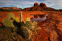 /images/133/2011-03-13-sedona-waterholes-57435.jpg - #09172: Prickly Pear cactus and Cathedral Rock in Sedona … March 2011 -- Cathedral Rock, Sedona, Arizona