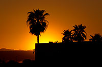 /images/133/2011-04-01-havasu-sunset-palms-65489.jpg - #09208: Sunset near London Bridge in Lake Havasu City … April 2011 -- Beach Park, Lake Havasu City, Arizona