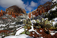 /images/133/2011-04-10-sedona-coffeepot-66326.jpg - #09201: Morning snow on Prickly Pear Cactus in Sedona … April 2011 -- Thunder Mountain, Sedona, Arizona