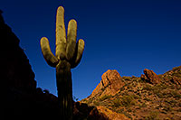 /images/133/2011-04-21-superstitions-cactus-66769.jpg - #09240: Late afternoon in Superstitions … April 2011 -- Superstitions, Arizona