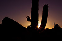 /images/133/2011-05-15-supers-star-70789.jpg - #09240: Sunset in Superstitions … May 2011 -- Superstitions, Arizona