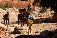 /images/133/2011-06-24-havasu-canyon-78925.jpg - #09394: Pack horses along Havasupai Trail … June 2011 -- Havasupai Trail, Havasu Falls, Arizona