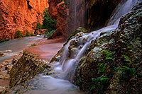 /images/133/2011-06-25-havasu-mooney-small-79559.jpg - #09409: Near Mooney Falls … June 2011 -- Havasu Creek, Havasu Falls, Arizona