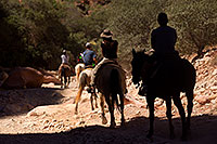 /images/133/2011-06-27-hava-canyon-riders-80998.jpg - #09426: Shadow rider and others along Havasupai Trail … June 2011 -- Havasupai Trail, Havasu Falls, Arizona