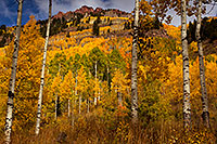 /images/133/2011-10-05-maroon-trees-layers-104898.jpg - #09610: Fall Colors in Maroon Bells, Colorado … October 2011 -- Maroon Bells, Colorado