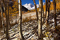 /images/133/2011-10-07-maroon-snowy-trees-105310.jpg - #09678: Fall Colors in Maroon Bells, Colorado … October 2011 -- Maroon Bells, Colorado
