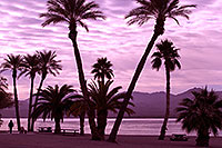 /images/133/2012-01-22-havasu-palm-beach-144307.jpg - #10128: Morning in Lake Havasu City, Arizona … January 2012 -- Beach Park, Lake Havasu City, Arizona