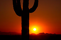 /images/133/2012-03-03-superstitions-sunset-146550.jpg - #10146: Saguaro cactus at sunset in Superstitions … March 2012 -- Lost Dutchman State Park, Superstitions, Arizona