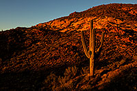 /images/133/2012-03-13-supers-cactus-valley-148610.jpg - #10168: Saguaro in the evening in Superstitions … March 2012 -- Apache Trail Road, Superstitions, Arizona