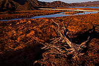 /images/133/2012-03-19-bill-will-morning-149604.jpg - #10084: Bill Williams River at Lake Havasu … March 2012 -- Bill Williams River, Lake Havasu, Arizona