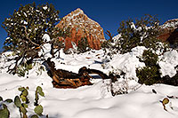 /images/133/2012-03-20-sedona-snow-cactus-149905.jpg - #10146: Snow in Sedona … March 2012 -- Thunder Mountain, Sedona, Arizona