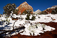 /images/133/2012-03-20-sedona-snow-cactus-149917.jpg - #10147: Snow in Sedona … March 2012 -- Thunder Mountain, Sedona, Arizona