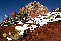 /images/133/2012-03-20-sedona-snow-cactus-149931.jpg - #10148: Snow in Sedona … March 2012 -- Thunder Mountain, Sedona, Arizona