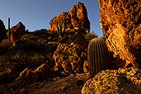 /images/133/2012-03-27-supers-cactus-151211.jpg - #10196: Saguaro Cactus in Superstitions … March 2012 -- Superstitions, Arizona